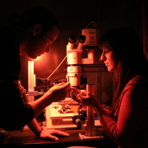 students working together under microscope