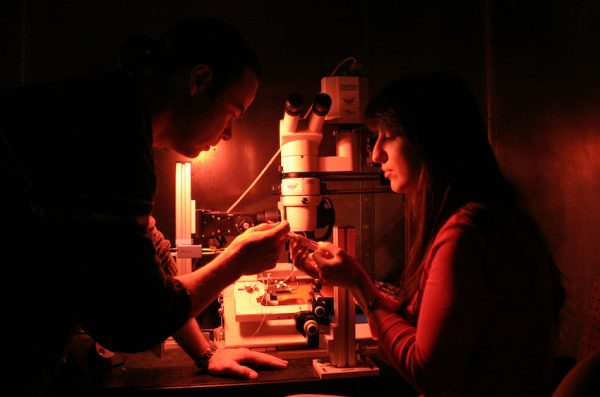 two people working with a microscope